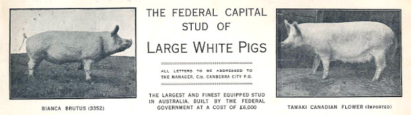 Hog Farm Letterhead 1929