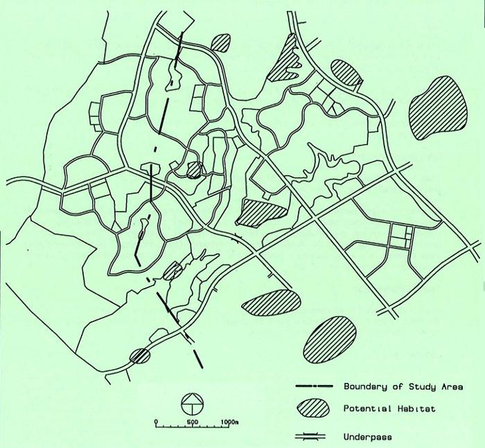 Lizard Habitats