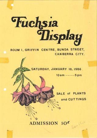 advertising - Fuschia Display