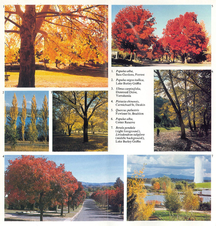Canberra Autumn: A Guide to the City's Colourful Trees - images of trees