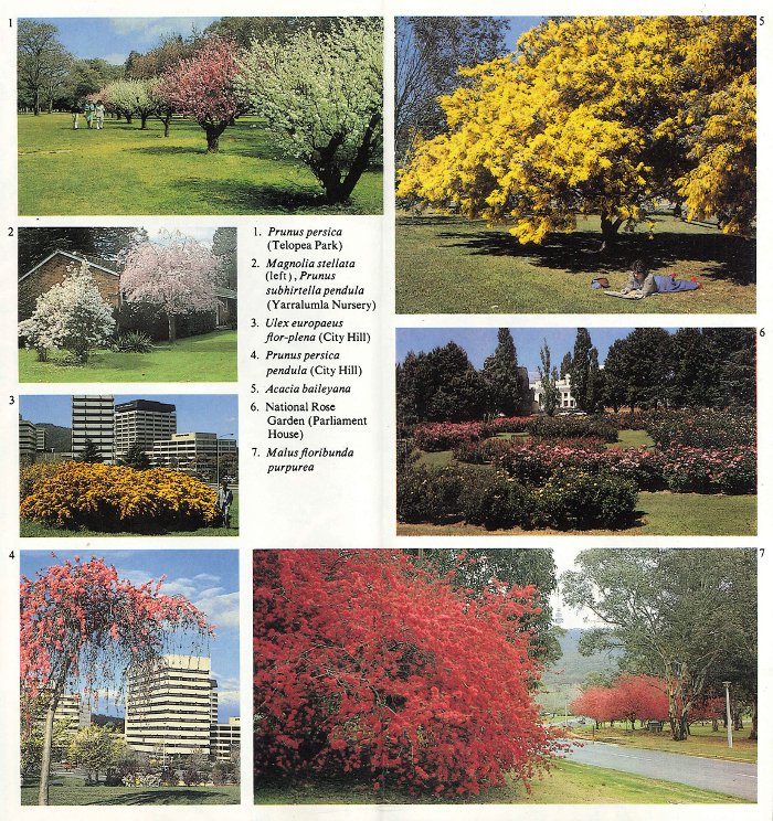 Canberra Spring: Flowering Trees and Map Guide tree photos